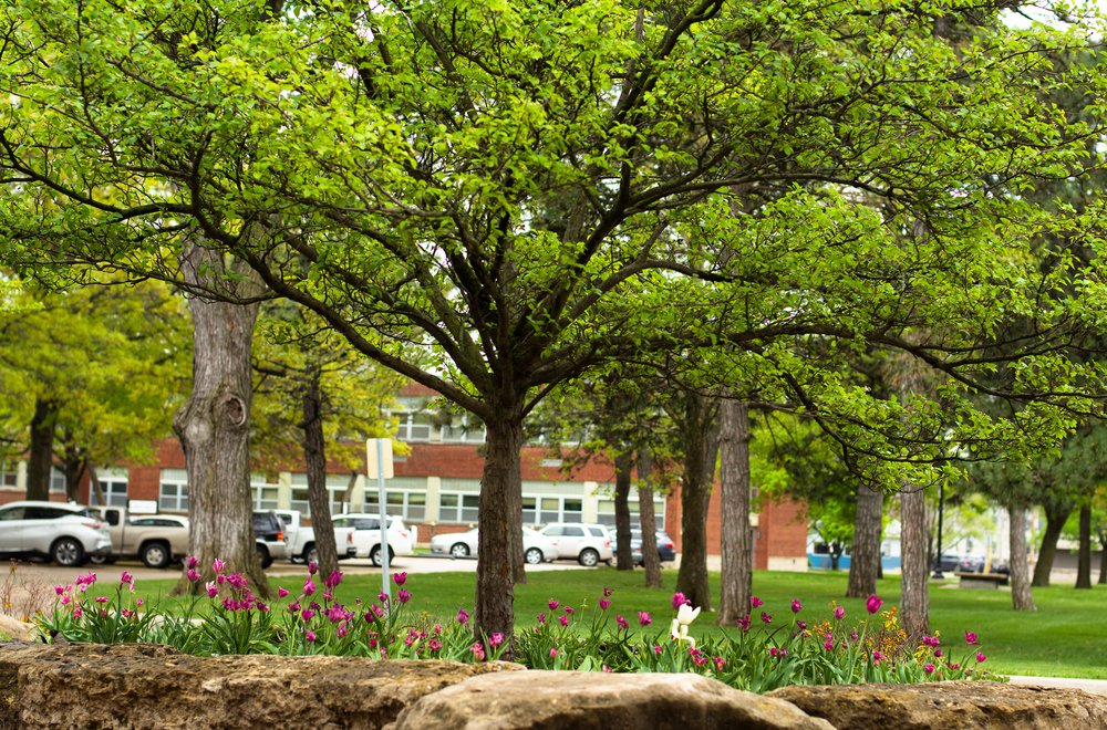 Campus trees flowers .JPG